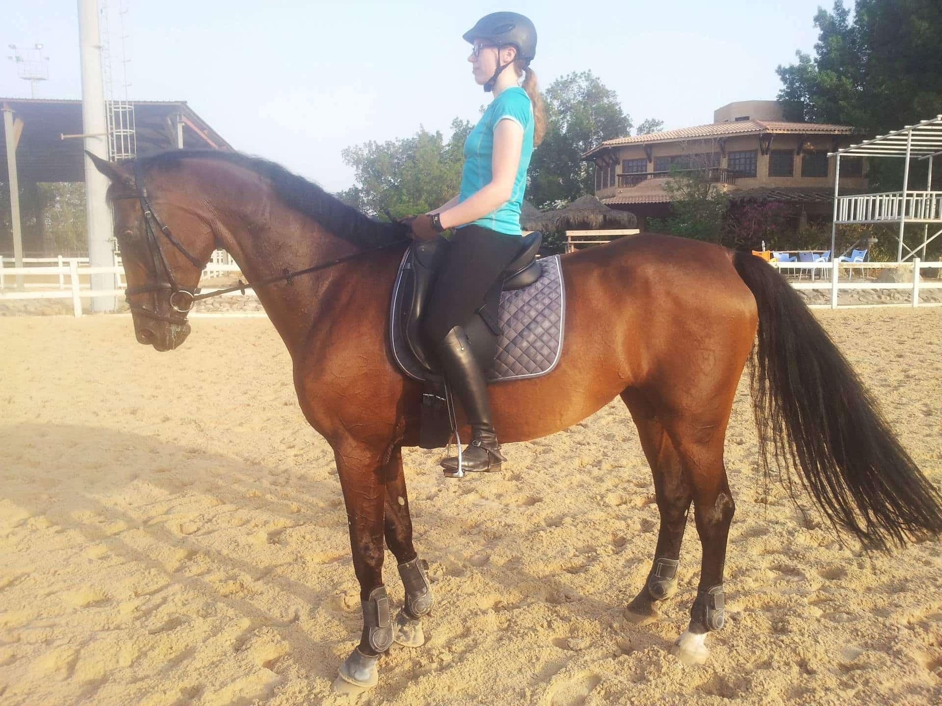 twilight_saddle_photo-min